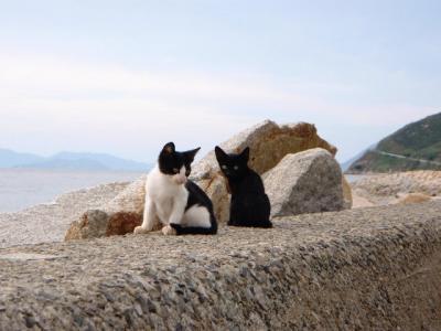 本島猫祭4
