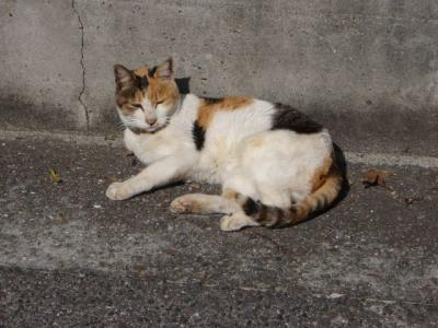 本島猫祭5