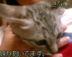 20060711034403.jpg
