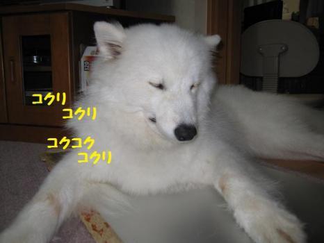 2009 8 20 ran1