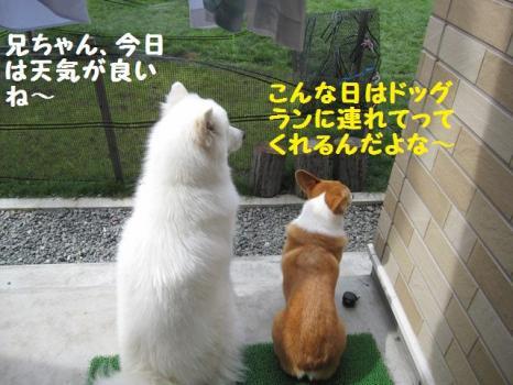 2009 8 29 dog1