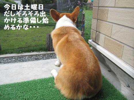 2009 8 29 dog2