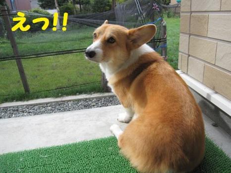 2009 8 29 dog3