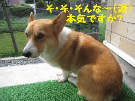 2009 8 29 dog4
