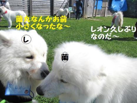 2009 8 29 dog5