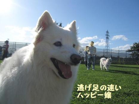 2009 8 29 dog6