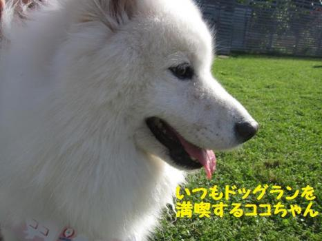 2009 8 29 dog7