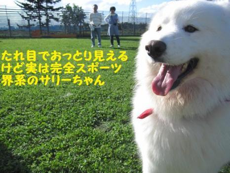 2009 8 29 dog8