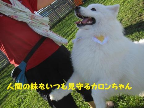 2009 8 29 dog10