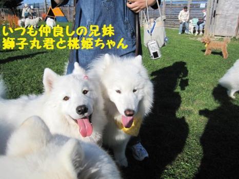 2009 8 29 dog11