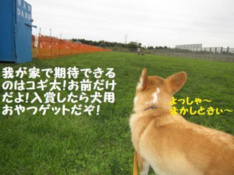 2009 8 30 dog3