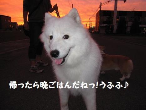 2009 8 30 dog5