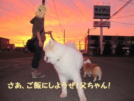 2009 8 30 dog6