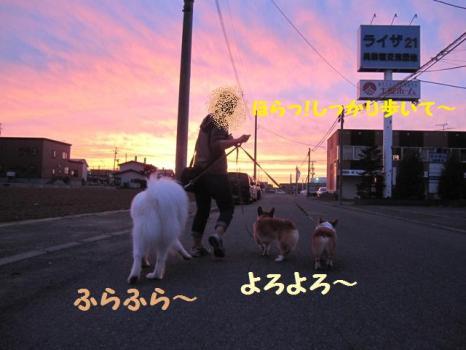 2009 8 30 dog7