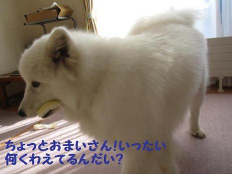 2009 9 2 dog1