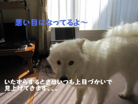 2009 9 2 dog2