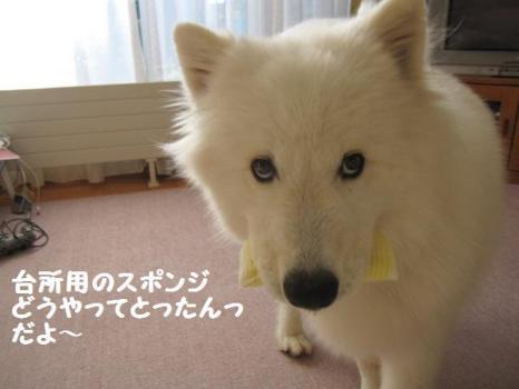 2009 9 2 dog3