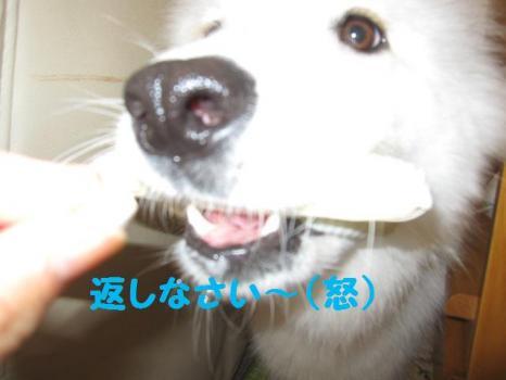 2009 9 2 dog4