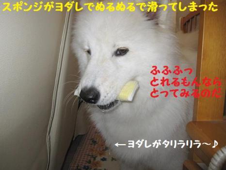 2009 9 2 dog5