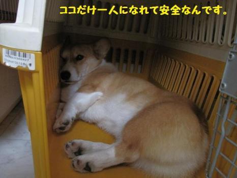 2009 9 5 dog2