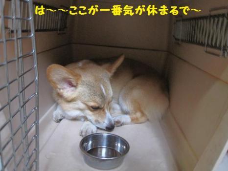2009 9 5 dog3