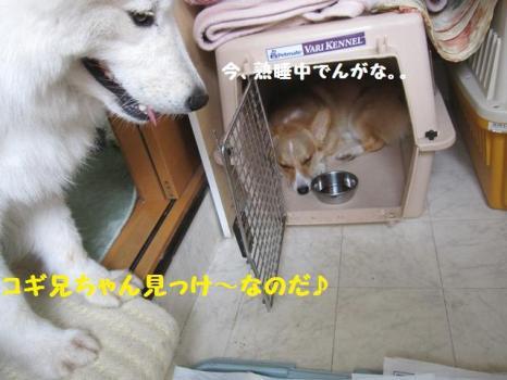 2009 9 5 dog4