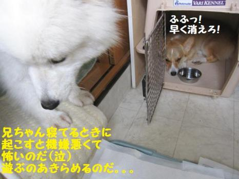 2009 9 5 dog5