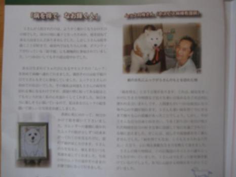 2009 9 8 dog3
