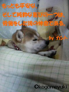 kakugen3.jpg