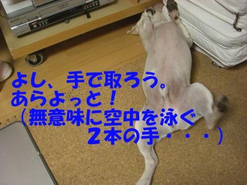 2008_0913画像0007