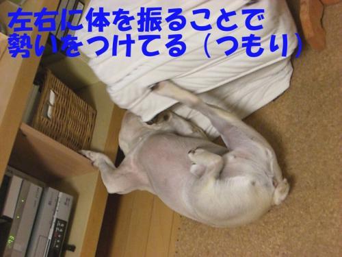 2008_0913画像0010