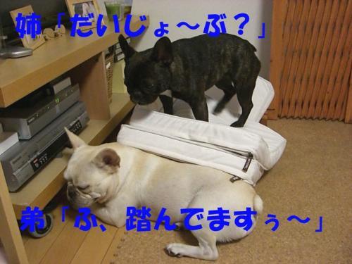 2008_0913画像0018