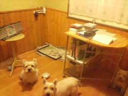 勉強犬部屋1