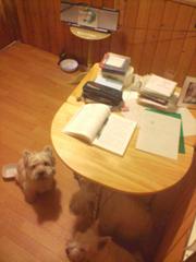 勉強犬部屋2