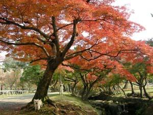 奈良公園 まー 1