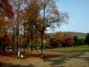 奈良公園 まー 2