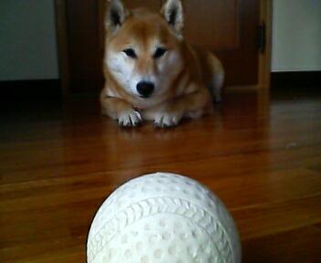 ボールとにらめっこ♪