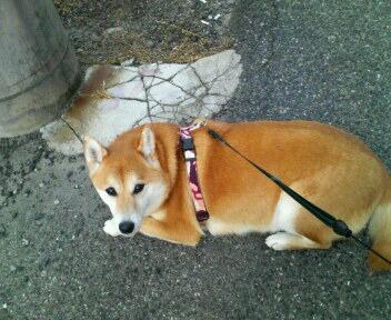 散歩疲れたの~