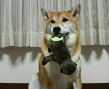 おもちゃ、見っけ♪