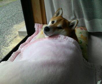 なによう~、お昼寝中なの!