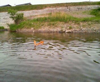 泳ぐの大好き♪
