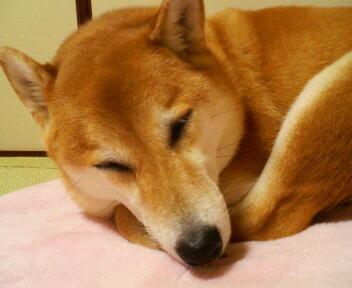 もう疲れたっ!