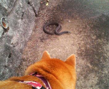 蛇、見っけ♪