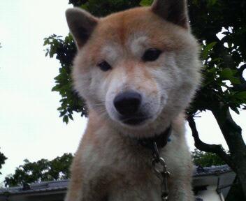 太郎くん、3歳
