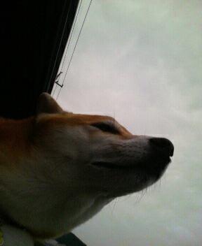車の窓から