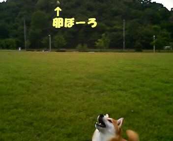 キャッチ寸前!
