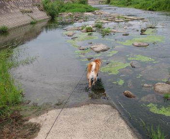 川、川、川~~♪