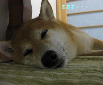 今日も疲れた・・・