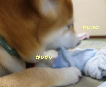 タオルのはしっこ好き~♪