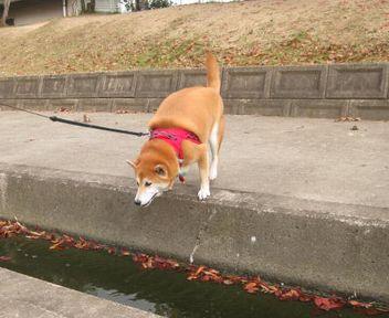 跳ぶよ~!